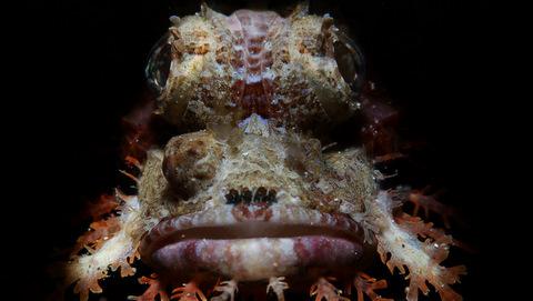 Fotografía bellezas submarinas en Filipinas