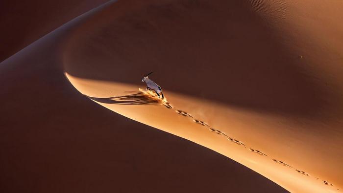 Gary Nader presents Ricardo Cisneros: Namibia, Tierra Sublime