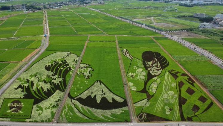 Arte en campos de arroz saluda los Juegos Olímpicos