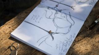 """Mondo Galería y Sustainable Art presentan  """"Los Almendros de Ibiza"""""""