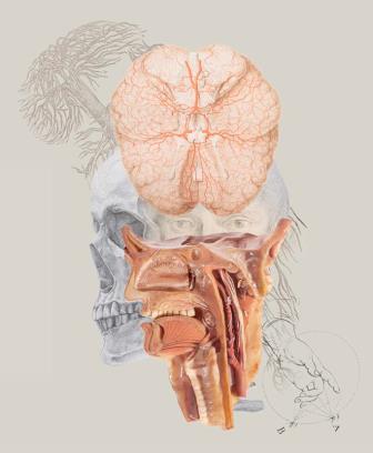 """La exposición """"Arte y Carne: la anatomía a la luz de la ilustración"""" se prorroga"""